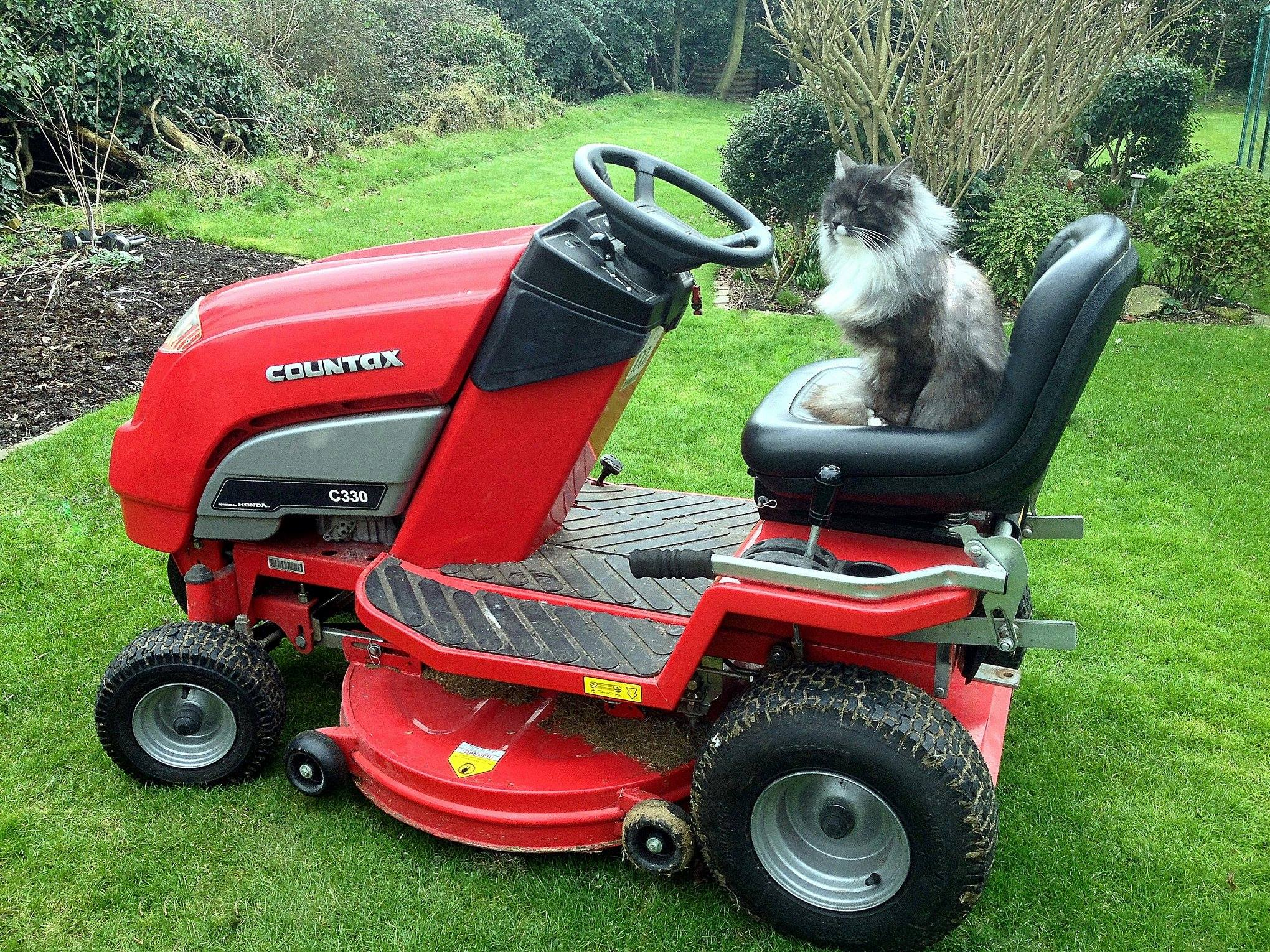 Cat on Countax garden tractor