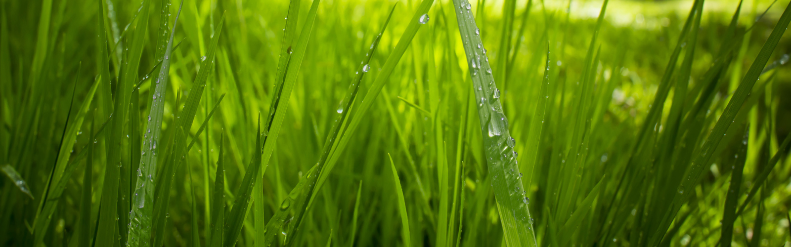 Countax lawn garden tractor mowers can cut wet grass