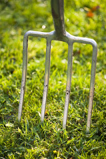 Fork in lawn for aeration